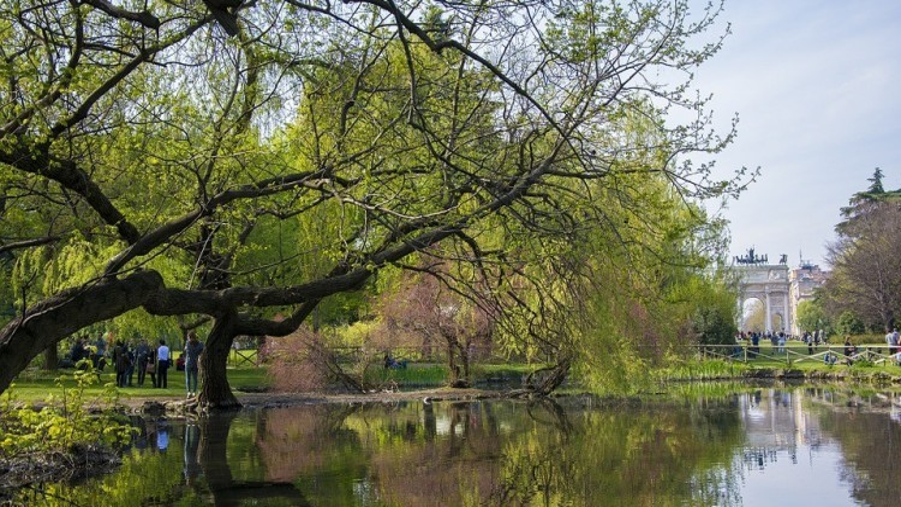 Milano: quasi 12.500 nuovi alberi in arrivo in città