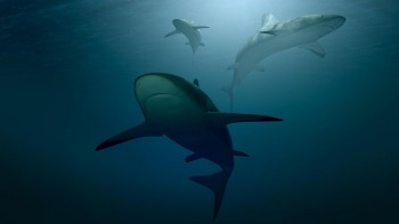 Parte da Monopoli la campagna WWF Safe Sharks