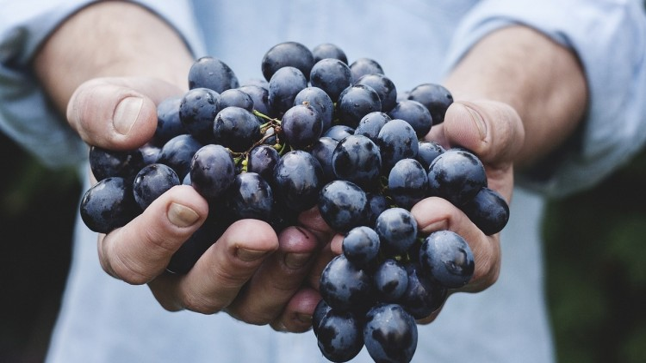 Convegno Naturae et Purae: focus su vino e cucina naturale