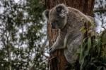 Australia, WWF: gli incendi hanno devastato soprattutto le aree protette