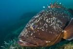 La scienzata Lisa Casali e WWF insieme a tutela le specie ittiche in pericolo