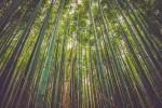 Altroconsumo no alle stoviglie in bambù: non sono green e rappresentano rischio per la salute
