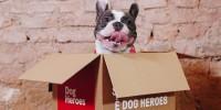 Inaugurato a Milano il temporary store del cibo fresco (e sano) per cani