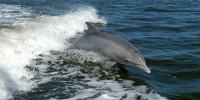Life Delfi, al via il progetto per salvare i delfini senza danneggiare i pescatori