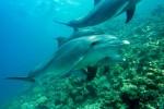 WWF Italia e fondazione CIMA insieme per i cetacei