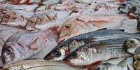 MSC Pesca Sostenibile lancia la campagna #mutocomeun...