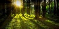 FSC: il 2020 sarà l'anno delle foreste