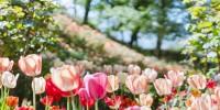 Giardini di Castel Trauttmansdorff: Biodiversità il tema della prossima stagione