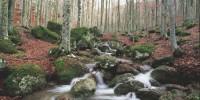 Rapporto PEFC: in Italia gestiti in modo sostenibile 881.068 ettari di foreste