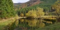 A boschi lombardi e toscani il bollino verde per i benefici ecologici offerti