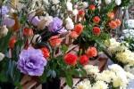 Coronavirus, via libera alla vendita di piante e fiori