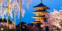 Pasqua in Giappone, tra i ciliegi in fiore