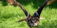 Covid 19, Lipu: cosa fare con la cura della fauna selvatica?