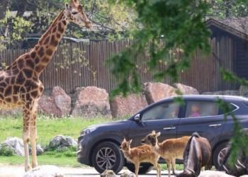 Riapre il Parco Natura Viva di Bussolengo