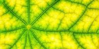Scoperte le interazioni molecolari tra proteine responsabili della fotosintesi clorofilliana