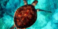 Greenpeace: bene l'impegno del Governo per la tutela del mare