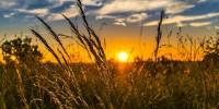 Scienziati europei lanciano appello alla UE per un'agricoltura amica dell'ambiente