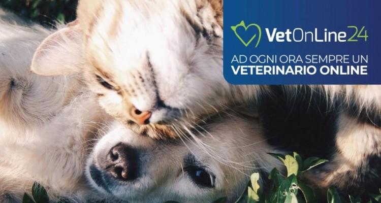 In tempo di coronavirus il consulto con il veterinario è in videochiamata