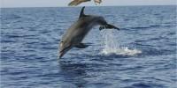 Isole Canarie, dove balene e delfini sono liberi di assembrarsi