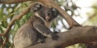 South Australia, la rinascita dell'Hanson Bay Wildlife Sanctuary