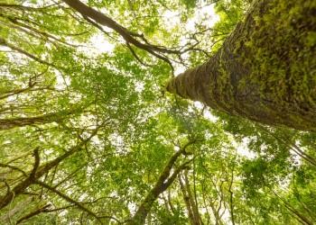 Lo spettacolo delle foreste preistoriche alle Canarie