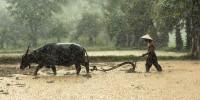 Greenpeace: per evitare nuove pandemie stop ai fondi pubblici per l'agricoltura intensiva