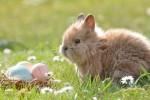 A Pasqua +45% uova vere, battono cioccolato