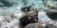 L'oceano dagli abissi alla superficie: il nesso tra clima, risalita delle acque profonde ed ecosistemi marini