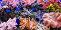 Project: CORaiL, l'intelligenza artificiale per la barriera corallina