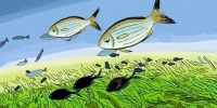 Un Cartoon per presentare la prima Spiaggia Ecologica italiana