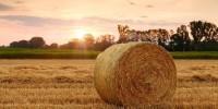 Clima, in Italia solo il 7% dei gas serra viene dall'agricoltura