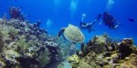 L'associazione Marevivo studia il mare durante il Coronavirus