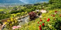 Ai Giardini di Castel Trauttmansdorff sbocciano le rose