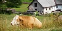 Fase 2, Coldiretti: in campagna a rischio 9 mln di presenze estive