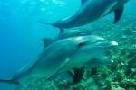 Un progetto per studiare la biodiversità del Mediterraneo senza nuocere a balene e delfini
