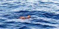 """Rio Mare e l'Area marina protetta delle Isole Egadi"""" hanno salvato 64 Caretta caretta"""