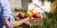 Nei masi Gallo Rosso per conoscere da vicino le mele