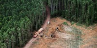 Rapporto Greenpeace: importiamo carne responsabile della distruzione dell'Amazzonia