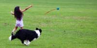 Viaggi dog-friendly: ecco i 10 consigli per tutelare la salute dei cani in vacanza