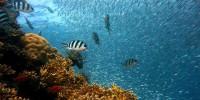 Oggi si celebra la Giornata Mondiale degli Oceani