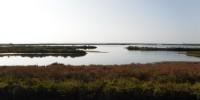 Laguna di Venezia: immessa d'acqua dolce per favorire ripopolamento pesci e uccelli