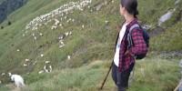 Orobie bergamasche, al via progetto per facilitare convivenza tra pastori e grandi predatori