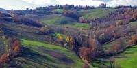 Al via KilometroVerdeParma: il progetto per creare aree verdi e boschi permanenti a Parma e provincia