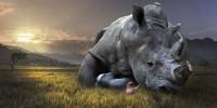 Nel mondo sono oltre un milione le specie a rischio estinzione
