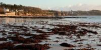 Posidonia oceanica spiaggiata: on line le linee guida dell'Ispra