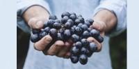 Ribes, lamponi e mirtillo nero: i consigli dei nutrizionisti per l'estate