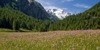 Parco Nazionale Gran Paradiso: al Colle del Nivolet a piedi, in bici o in navetta
