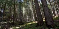 Estate tra i boschi: il decalogo PEFC Italia per rispettare le aree boschive