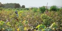Patagonia lancia la campagna per l'agricoltura organica e rigenerativa