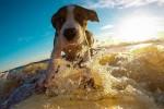 Vacanze: in Italia 1 famiglia su 5 viaggia con gli animali